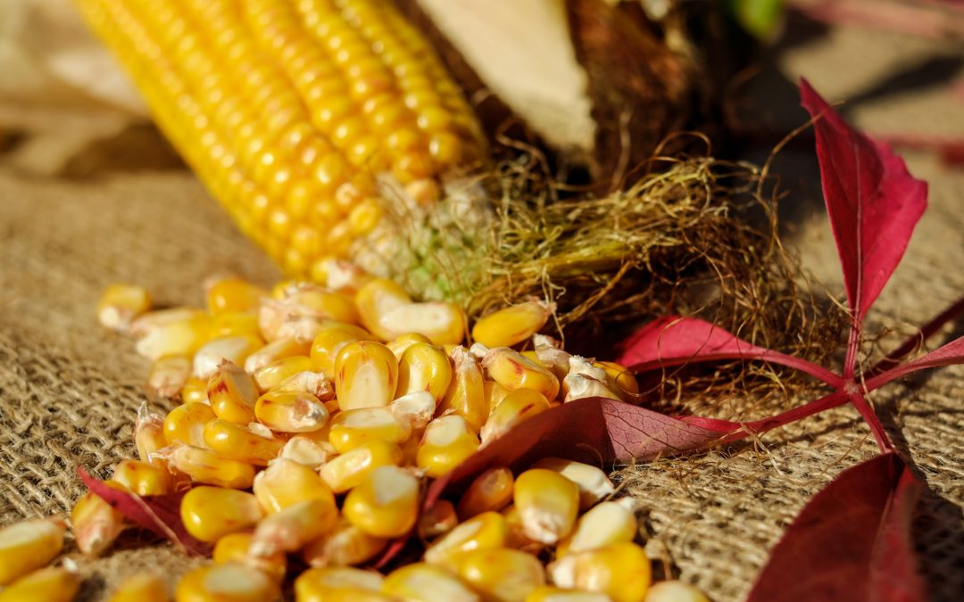 How to Make Perfectly Grilled Corn on the Cob