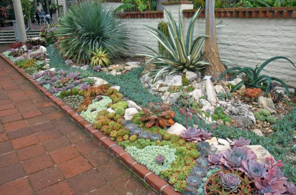 Top 12 Succulent Plants That's A Perfect Fit For Your Outdoors