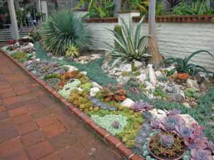 Succulent Plants for Outdoors