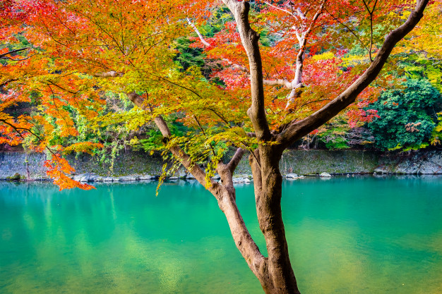 beautiful arashiyama river with-maple leaf tree boat around lake